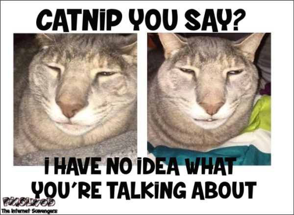 Catnip you say funny cat meme - Hilarious daily pictures @PMSLweb.com