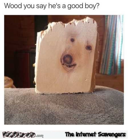Would you say he's a good boy funny meme