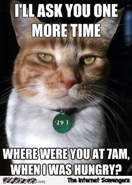 Where were you when I was hungry funny cat meme @PMSLweb.com