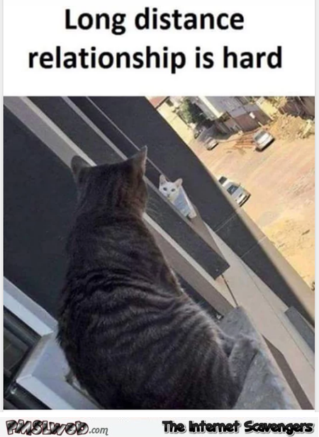 Long distance relationship is hard funny cat meme @PMSLweb.com