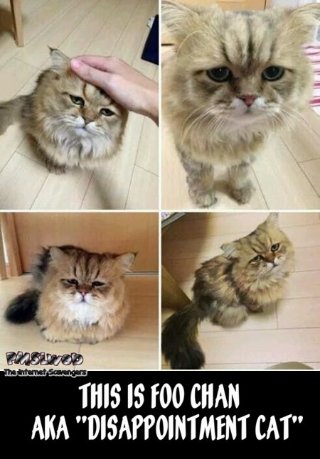 Meet Foo Chan disappointment cat meme @PMSLweb.com