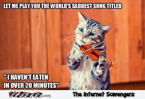 Funny Meme Song : Cat playing the saddest song funny meme pmslweb