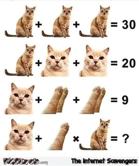 Funny cat math test - Daily memes and funny pics @PMSLweb.com