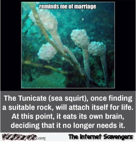 Sea creature reminds me of marriage funny meme - Jocular daily pics and memes @PMSLweb.com