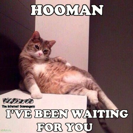 Hooman I've been waiting for you cat meme - Funny meme collection @PMSLweb.com