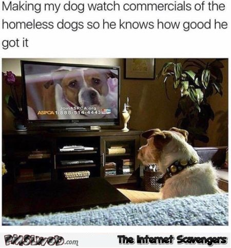 I make my dog watch homeless dog commercials funny meme @PMSLweb.com