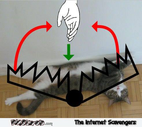 Funny cat trap guide - Funny Hump day image gallery @PMSLweb.com
