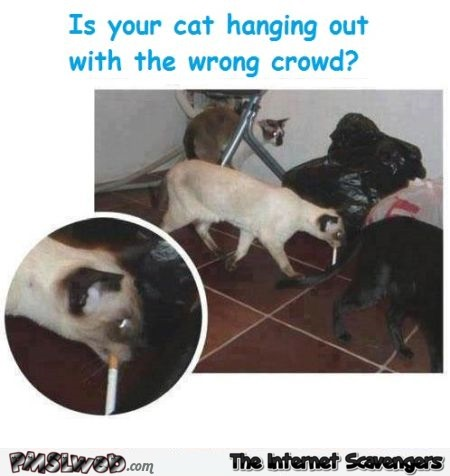 Is your cat hanging out with the wrong crowd funny meme @PMSLweb.com