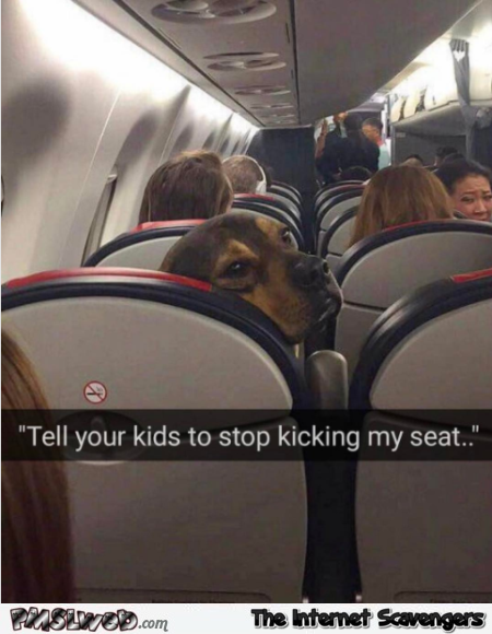 Tell your kids to stop kicking my seat funny dog meme @PMSLweb.com