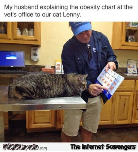 Husband explaining obesity chart to cat funny meme @PMSLweb.com