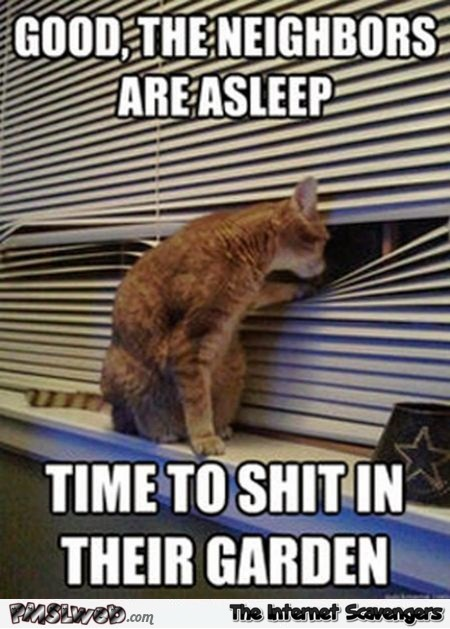Time to shit in the neighbors garden funny cat meme - Funny weekend memes collection @PMSLweb.com