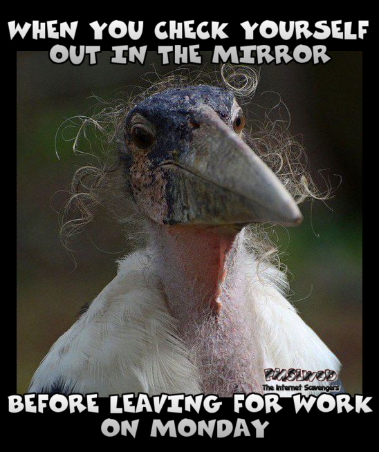 30 what you see in the mirror on Monday morning funny meme what you see in the mirror on monday morning funny meme pmslweb