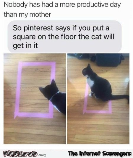 If you put a square on the floor your cat will get in it funny meme @PMSLweb.com