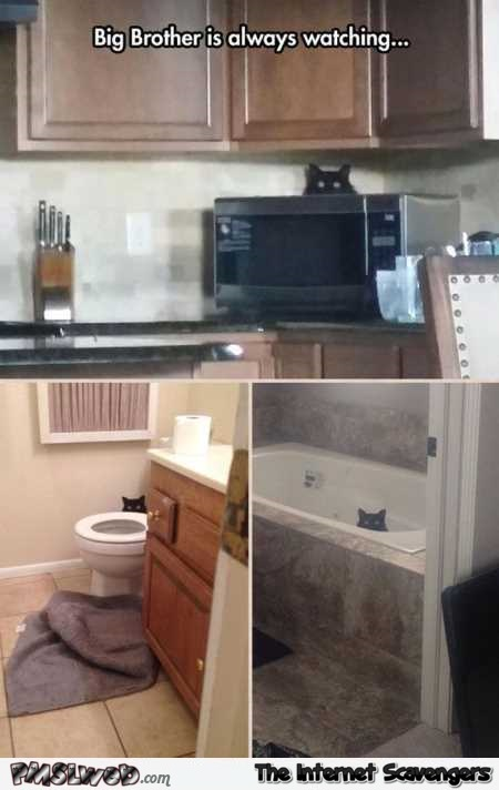Big brother is always watching funny cat meme @PMSLweb.com