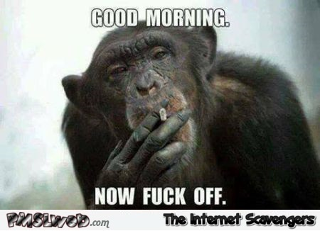 Good morning now fuck off funny sarcastic meme - Witty sarcastic humor @PMSLweb.com