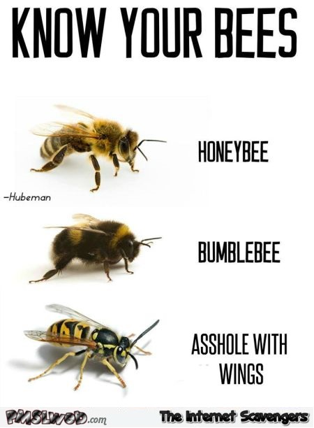 Know your bees funny meme @PMSLweb.com