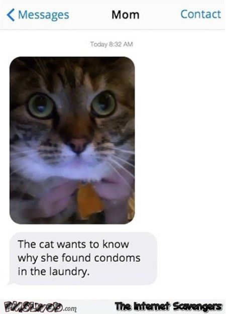 Cat wants to know why she found condoms in the laundry funny text message @PMSLweb.com