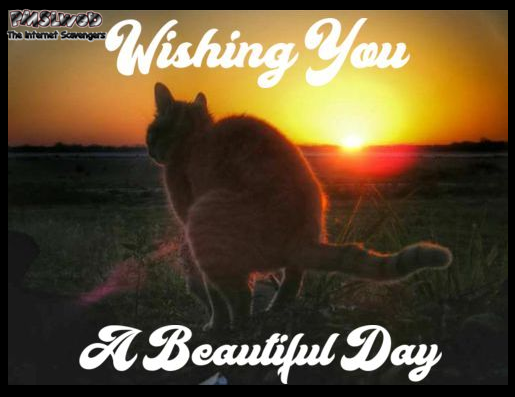Have a beautiful day funny inappropriate cat meme @PMSLweb.com