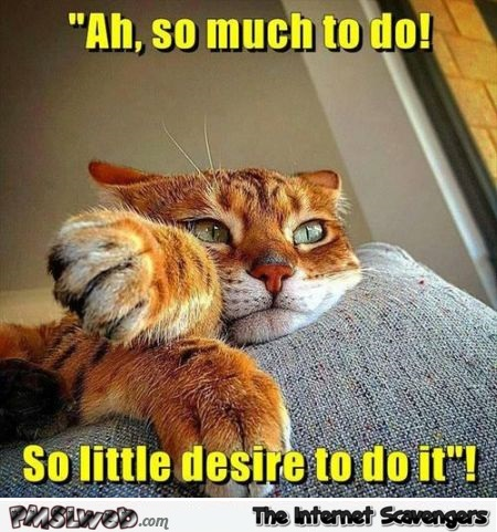 So much to do funny cat meme @PMSLweb.com