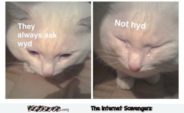 They are always asking me what I'm doing funny cat meme @PMSLweb.com
