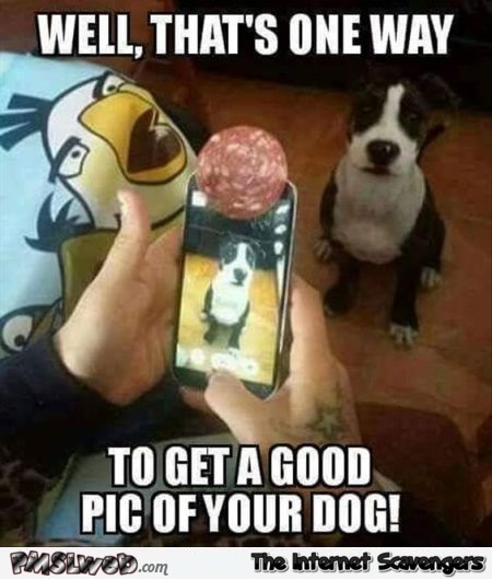 How to get a good picture of your dog funny meme @PMSLweb.com