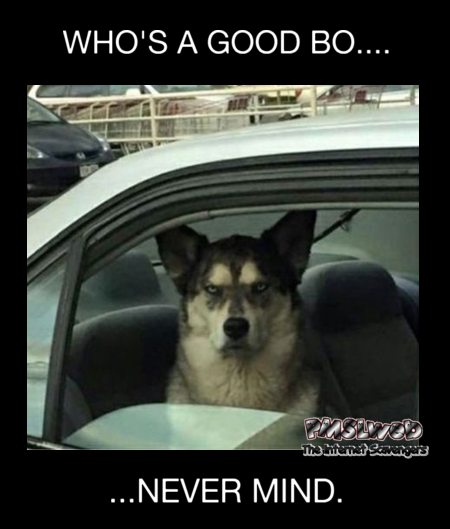 Who's a good boy funny meme - Sunday LOL Time @PMSLweb.com