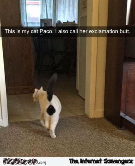 Exclamation butt cat funny meme @PMSLweb.com