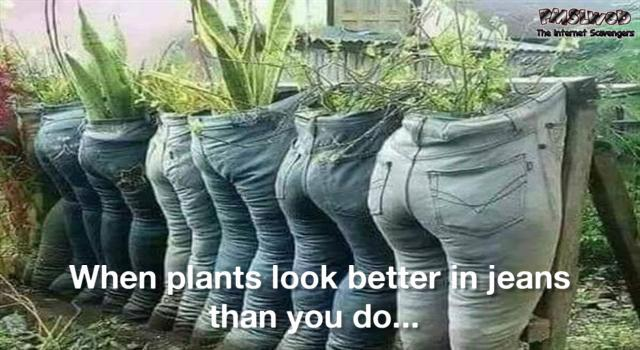 When plants look better in jeans than you do funny meme - Funny meme Wednesday @PMSLweb.com