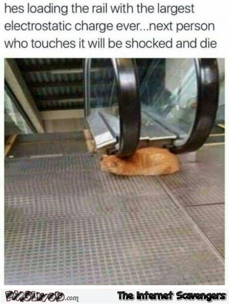 Cat loading an electrostatic charge funny meme - Chucklesome memes @PMSLweb.com