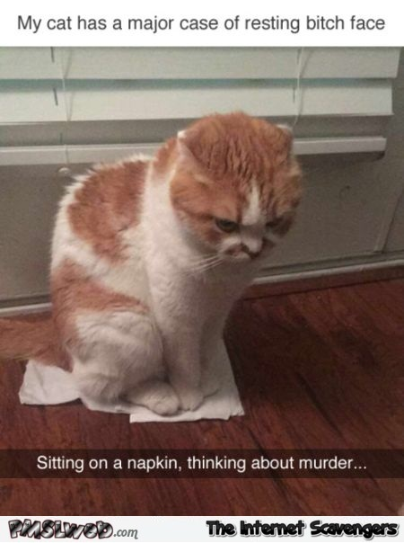 Cat with resting bitch face funny meme @PMSLweb.com