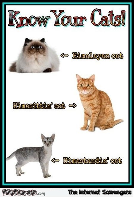 Know your cats funny meme - Funny Internet pics @PMSLweb.com