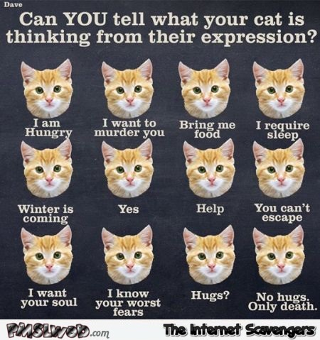 Funny cat expressions chart