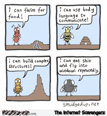 Awesome talents different insects have funny comic @PMSLweb.com