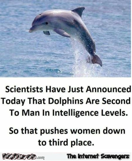 Dolphins are second to men in intelligence levels sarcastic sexist humor @PMSLweb.com