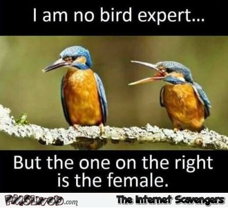 I am no bird expert but the one on the right is the female funny meme @PMSLweb.com