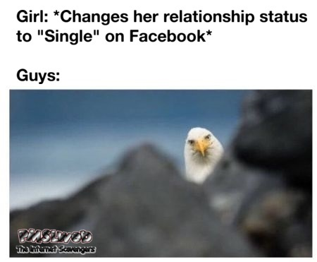 When a girl changes her status to single funny meme @PMSLweb.com