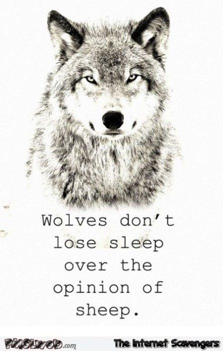 Wolves don't lose sleep over the opinion of sheep sarcastic quote