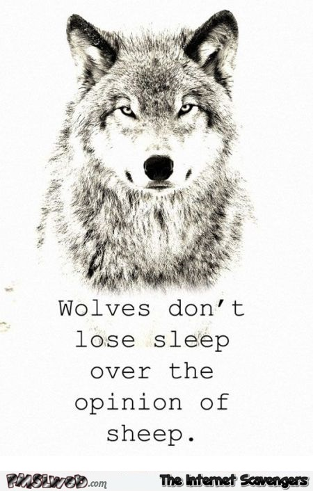 Wolves don't lose sleep over the opinion of sheep sarcastic quote @PMSLweb.com