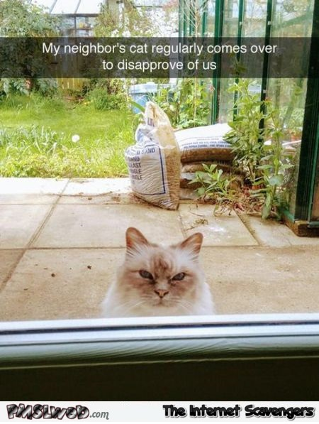 The neighbor's cat comes over to disapprove of us funny meme @PMSLweb.com