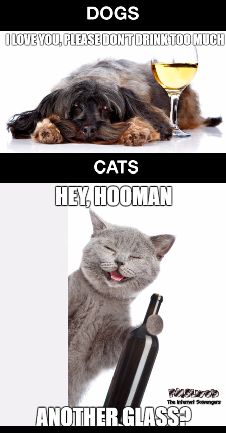 Dogs versus cats when you drink funny meme - Jocular Internet nonsense @PMSLweb.com