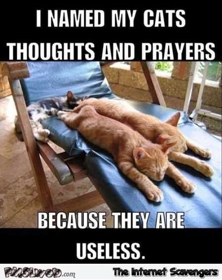 I named my cats thoughts and prayers sarcastic meme @PMSLweb.com