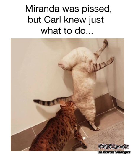 Carl knew just what do do funny cat adult meme @PMSLweb.com