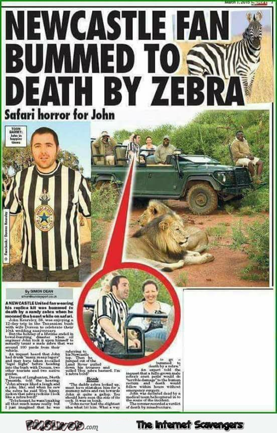 Newcastle fan bummed to death by zebra funny WTF news @PMSLweb.com