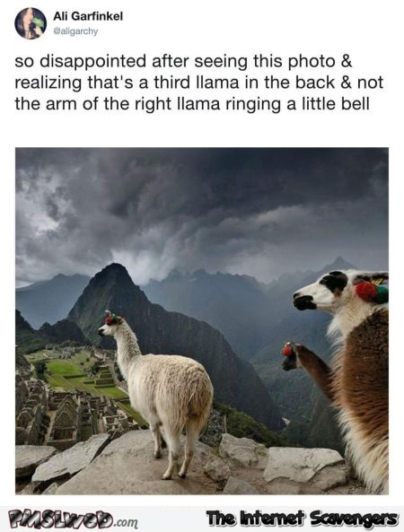 I'm disappointed that the llama on the right isn't riniging a little bell funny tweet @PMSLweb.com