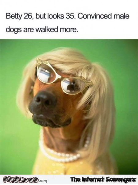 Funny feminist dog profile - Pics and giggles @PMSLweb.com