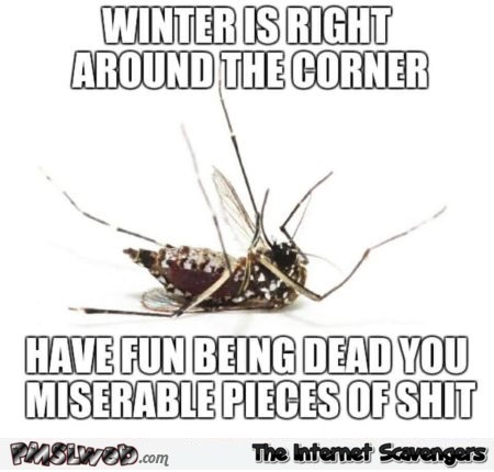 Winter is right around the corner funny sarcastic mosquito meme @PMSLweb.com