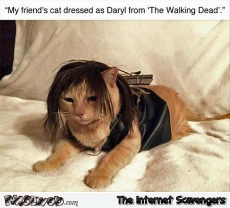 Cat dressed as Daryl from the Walking Dead funny meme @PMSLweb.com