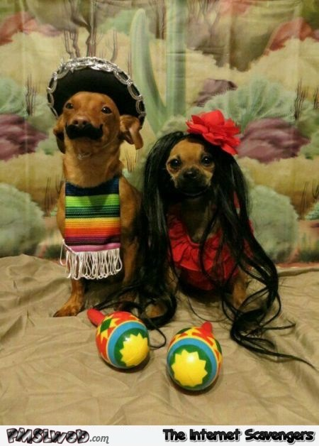 Funny Hispanic dog costumes @PMSLweb.com