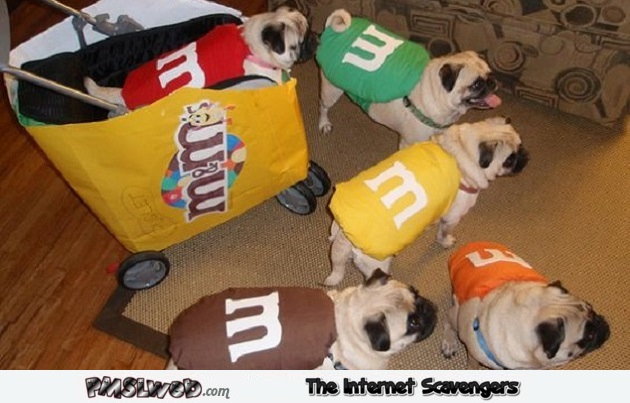 Funny pug dogs M&M's Halloween costumes - Funny Halloween pictures @PMSLweb.com