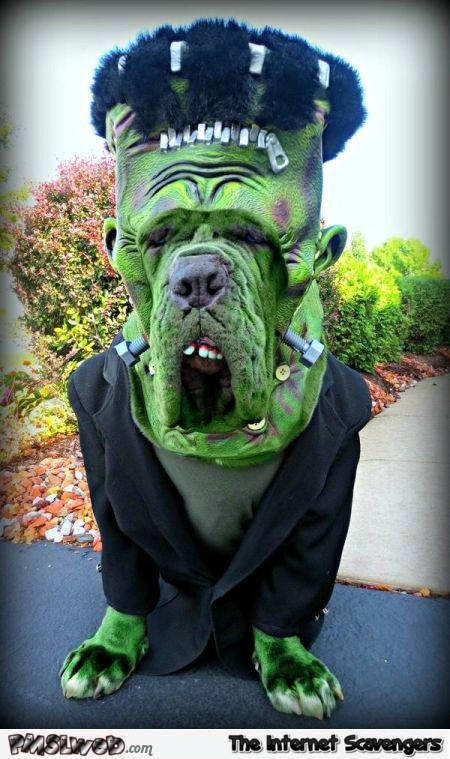 Funny Halloween Frankenstein monster dog costume @PMSLweb.com